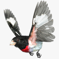 rose-breasted grosbeak 3d max