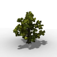 oak-tree lod level 3d model