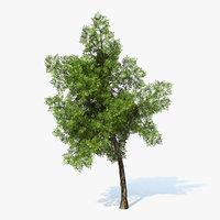 Generic Tree 02