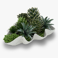 Succulents in a Giant Clam Bowl