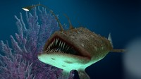 3d angler monkfish waters