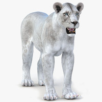 lioness white lion 3d 3ds