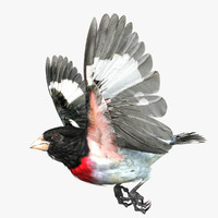 3d model rose-breasted grosbeak