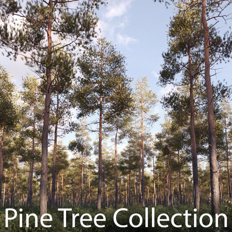 pine_tree_collection_v01_final2.jpg
