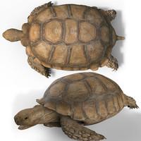 obj turtle