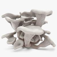 3d oyster mushroom white model