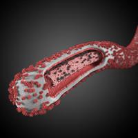 max ebola virus