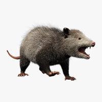 Possum Fur Rigged