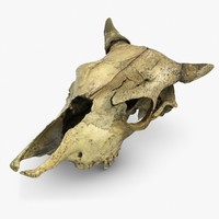 3ds max cow skull