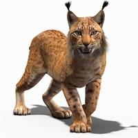 max lynx cat