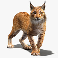 3ds lynx eurasian rigging animation