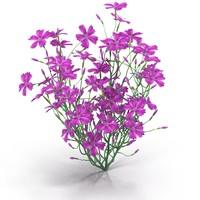 3d carnation model