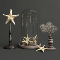 3d decor starfish