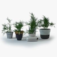 dill pot plant 3d model