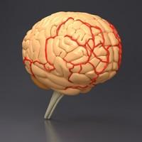 3d brain head