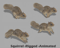 squirrel rigged 3d max