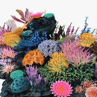 max coral marine life