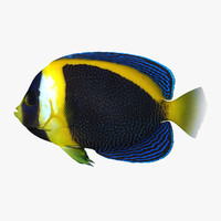 scribbled angelfish 3d 3ds