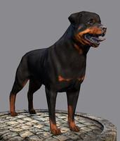 Dog Rottweiler