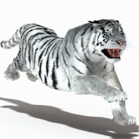 3ds max tiger amur white rigged