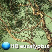 3d model eucalyptus tree hq