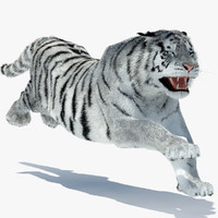 3d tiger amur white rigged model