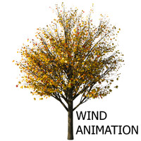 Autumn acer tree with wind animation