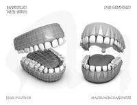 free teeth 3d model