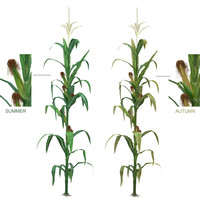 3d model low-mid corn
