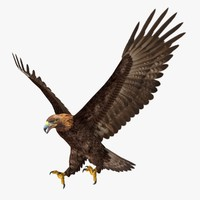3d model aquila chrysaetos golden eagle