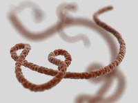 3d ebola virus