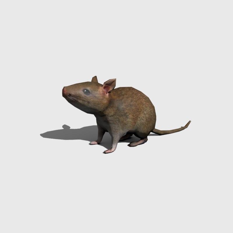 rat4.png