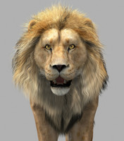 lion cat 3d model