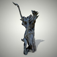3d model old tree trunk