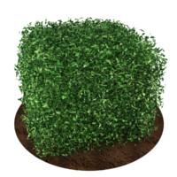 plant bush max free
