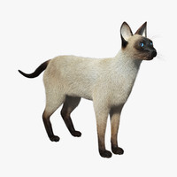 3d max siamese cat fur