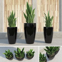outdoor plants gardening 3d obj
