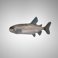 3ds max fish altobimedia