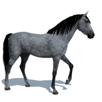 3d horse animations colour 10 model