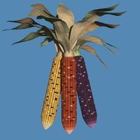 indian corn 3d model