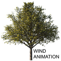 3d model autumn tree animation wind