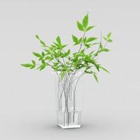 ptelea trifoliata 3d max