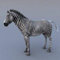 zebra max