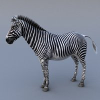 zebra body tongue 3d model