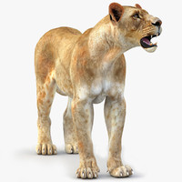 3d model lioness rigged cat