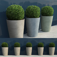 shrubs pots 7 3d model