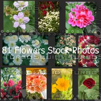 81 Flowers Photos