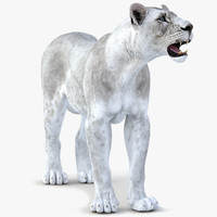 3d lioness white rigged cat model