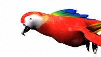 parrot 3d obj