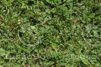 Grass Tillable Texture-1